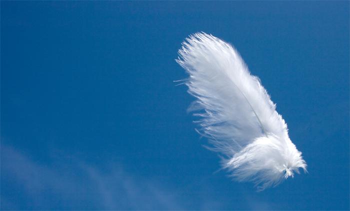 Foto vliegend veertje van phoebe20052000 - Lucht treca veer ...