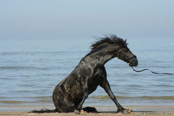 paard eet zand