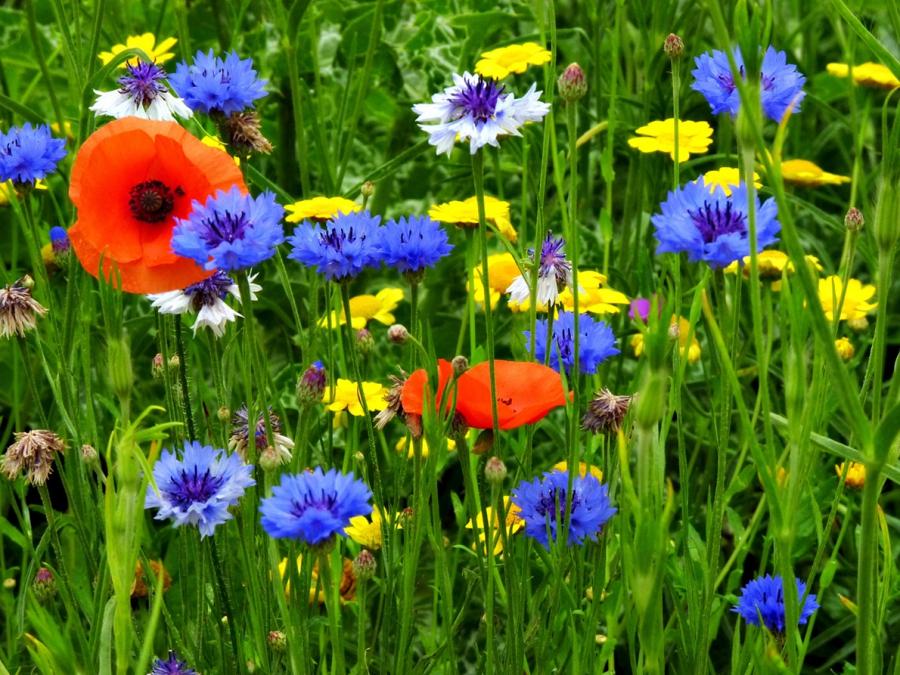 foto wilde bloemen kleurrijk van blanka