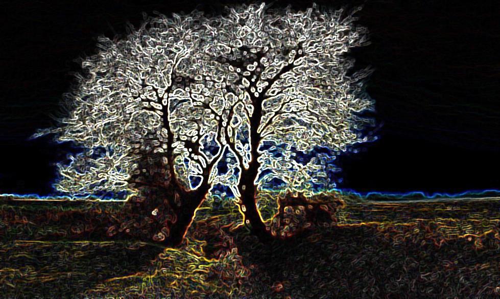 Foto Verlichte bomen van zon123