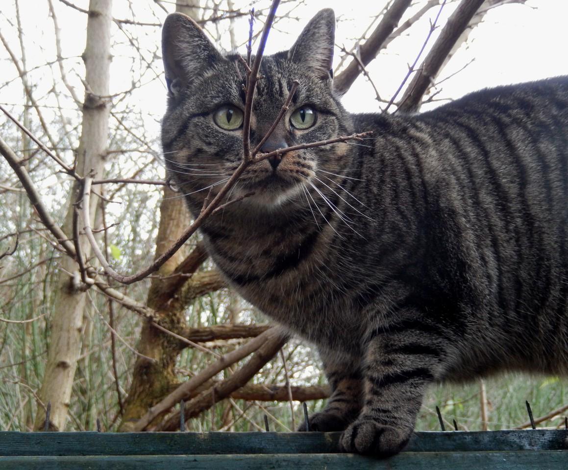 foto mijn fotogenieke cyperse kat van corrylengkeek. Black Bedroom Furniture Sets. Home Design Ideas