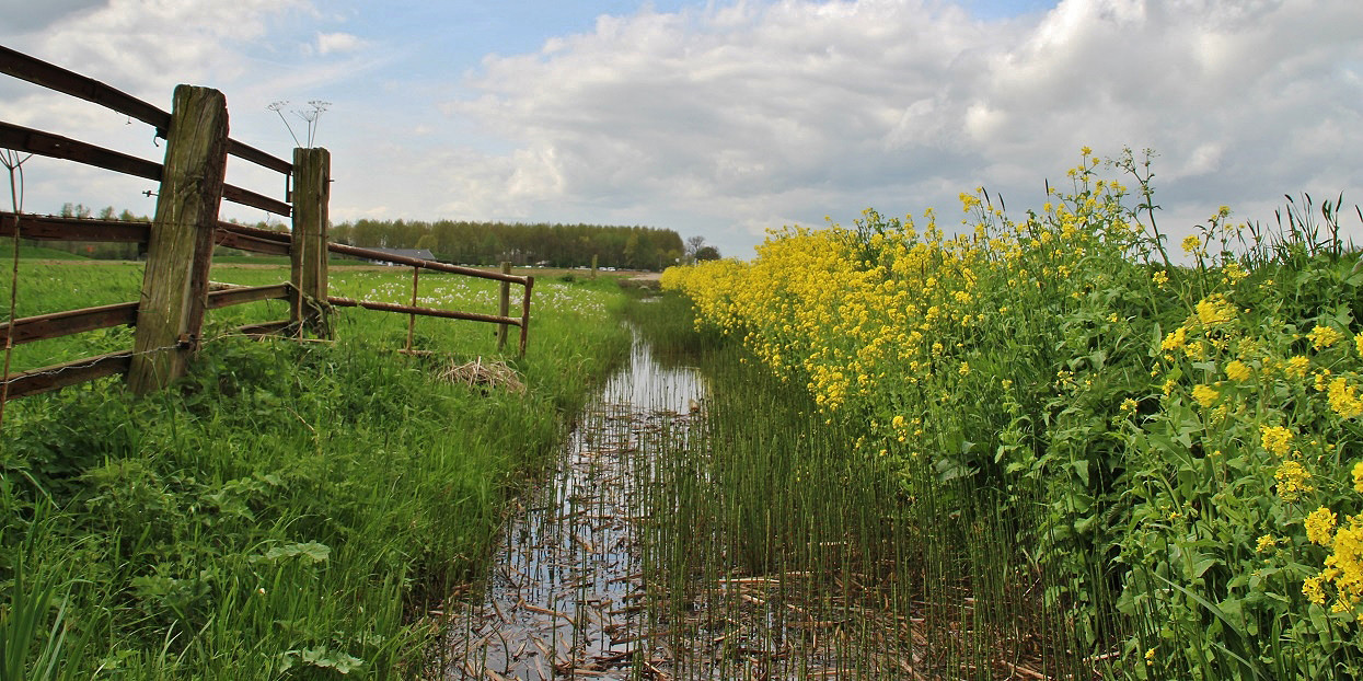 Foto Polder in de lente door zon123