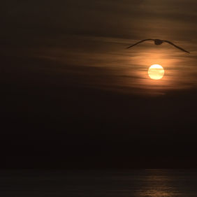 Foto Jonathan Livingston Seagull door HEYLO