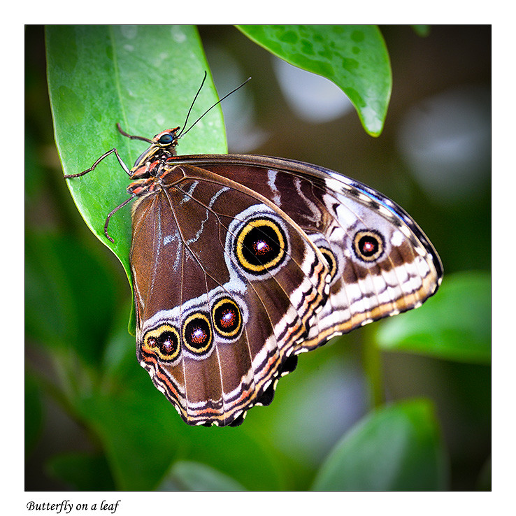 Foto Butterfly on a leaf door Qpic