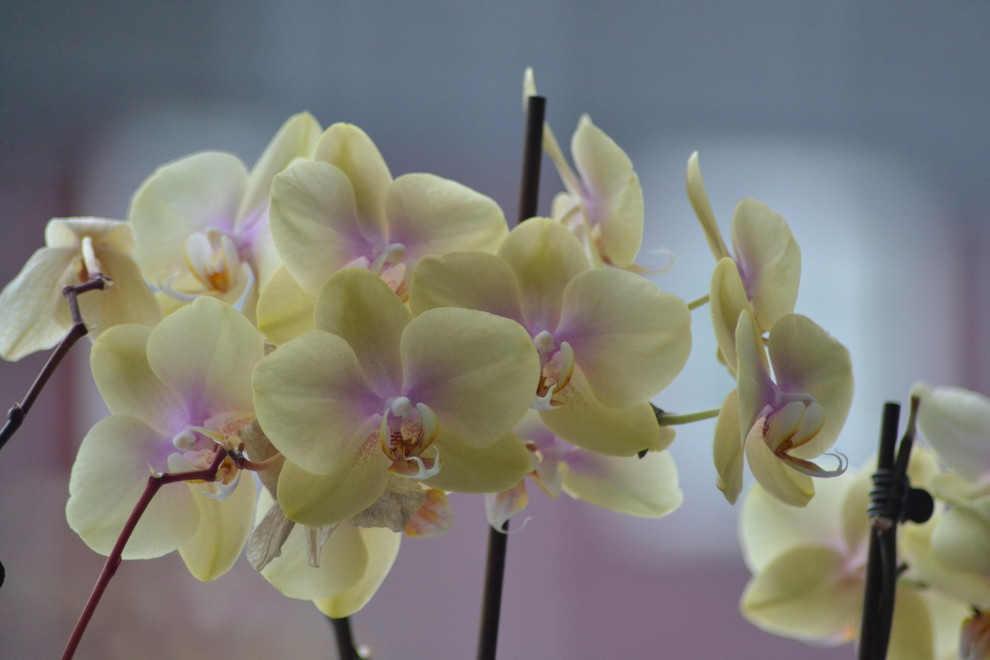 Foto orchidee door keyzer