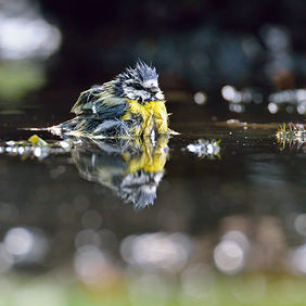 Foto Wet tit door Qpic