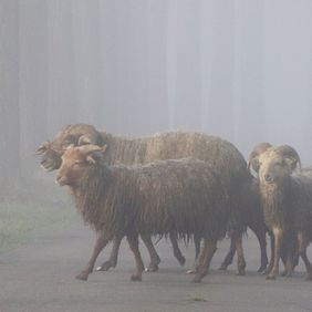 "Foto Overstekend ""wild"" in de mist door zon123"