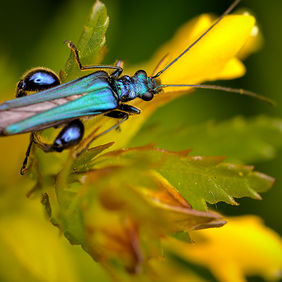 Foto A blue insect door Qpic