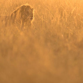 Foto Big Mane Sunrise door IngridVekemans