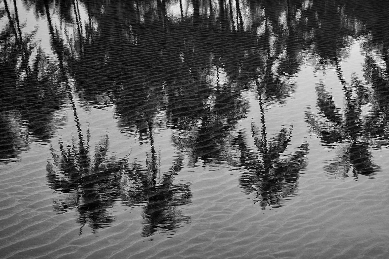 Foto abstract cocos door ElaineS