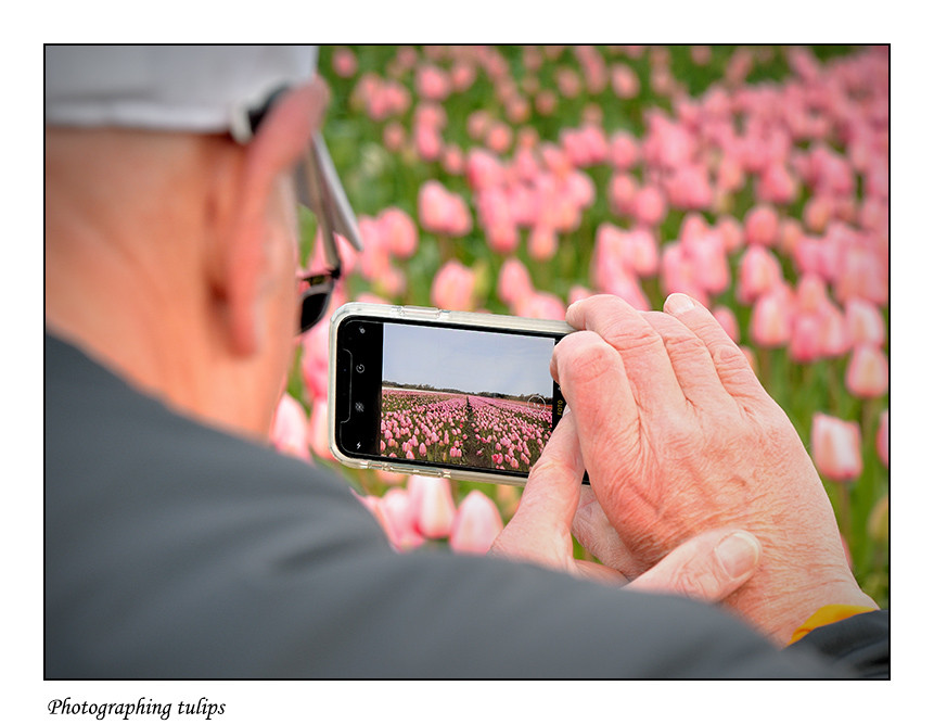 Foto Photographing tulips door Qpic