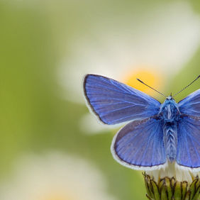 Foto common blue door eos