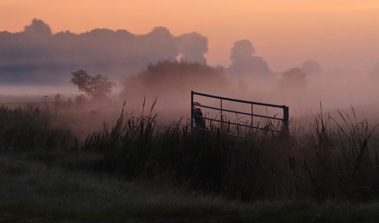 Foto Polderlandschap in de mist door zon123